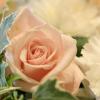 花のように愛しましょう