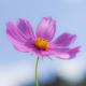 小さな花のように