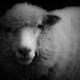 暗闇の中の子羊